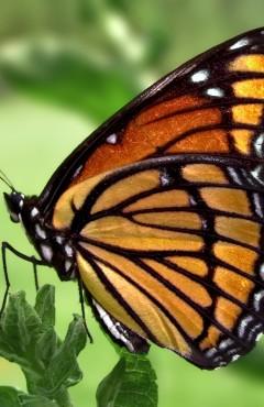 002-borboleta