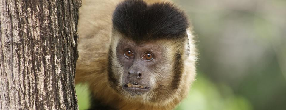 002-macaco-1-CAMPANHA-NACIONAL-COMBATE-TRÁFICO-ANIMAIS-SILVESTRES