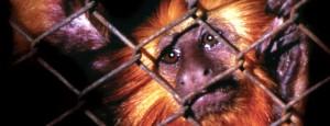 Campanha de Combate ao Comércio Ilegal de Animais Silvestres