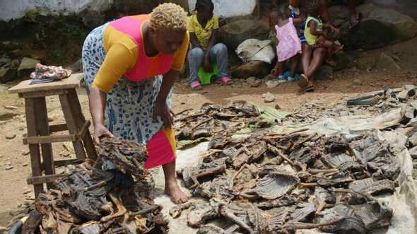 Em certas regiões da África, milhões de toneladas de carne selvagem são consumidas por ano.