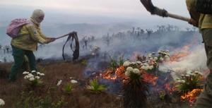 Brigadistas voluntários atuam no combate ao incêndio. Foto: Divulgação/Vanessa Carvalho