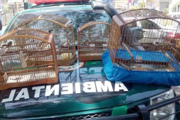 Policiais resgataram na tarde da última sexta-feira quatro pássaros que eram mantidos em cativeiro em São Gonçalo. Foto:  Divulgação