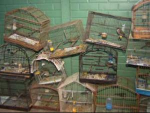 Pássaros foram soltos no fim da tarde desta segunda-feira (13). Foto: Reprodução RPC TV