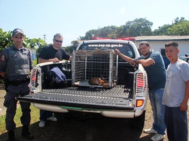 Animal foi receberá avaliação do veterinário da Secretaria de Meio Ambiente do Estado. Foto: Marcos Costa / Arquivo Pessoal