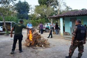 Gaiolas de cativeiros foram destruídas por integrantes da Cipoma. Foto: Divulgação/ CPRH