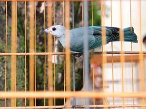 Pássaros serão devolvidos ao 'habitat', segundo agência ambiental. Foto: Divulgação/ CPRH