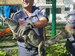Animal foi capturado pelo Corpo de Bombeiros nesta quinta-feira (2). Foto: Arquivo Pessoal/Isabel Aquino