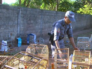 Polícia Ambiental localizou as aves no Recreio Internacional, após denúncia. Foto: Carlos Trinca/EPTV