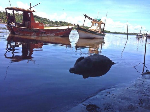 Peixe-boi foi encontrado boiando no Rio Santo Antônio Grande, na Barra de Santo Antônio. Foto: Roberta Cólen/G1
