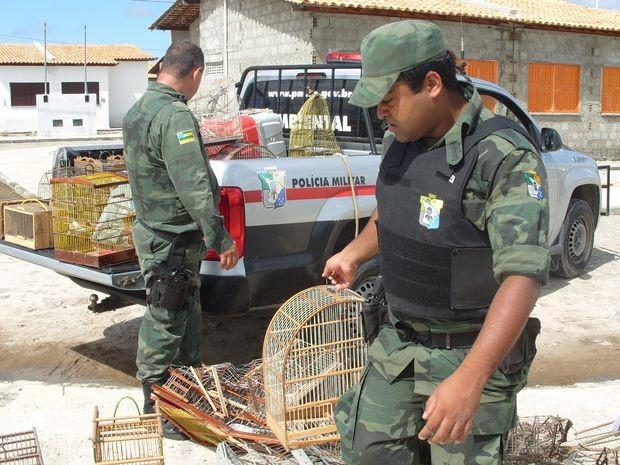 Aves seriam comercializadas ilegalmente em Sergipe. Foto: Divulgação/Pelotão Ambiental