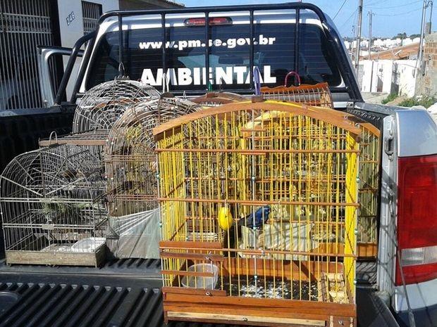 Pelotão de Polícia Ambiental apreende aves silvestres em Aracaju. Foto: Divulgação/Pelotão Ambiental