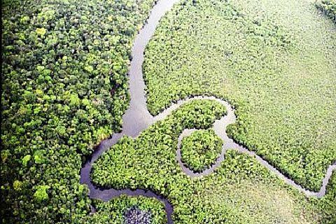 Foto: Divulgação/ICMBio-Alto Maués
