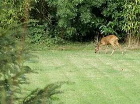 A carcaça foi encontrada no interior do jardim de John Griffin, um morador da região. Foto: Daily Mail / Reprodução