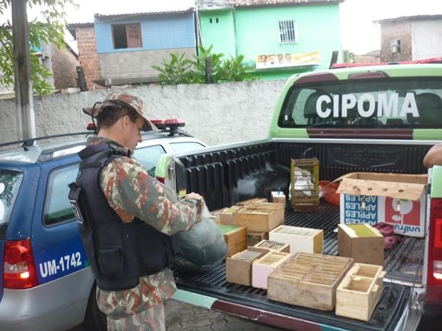 Aves silvestres eram mantidas em cativeiro e comercializadas ilegalmente. Foto: Polícia Militar/Divulgação