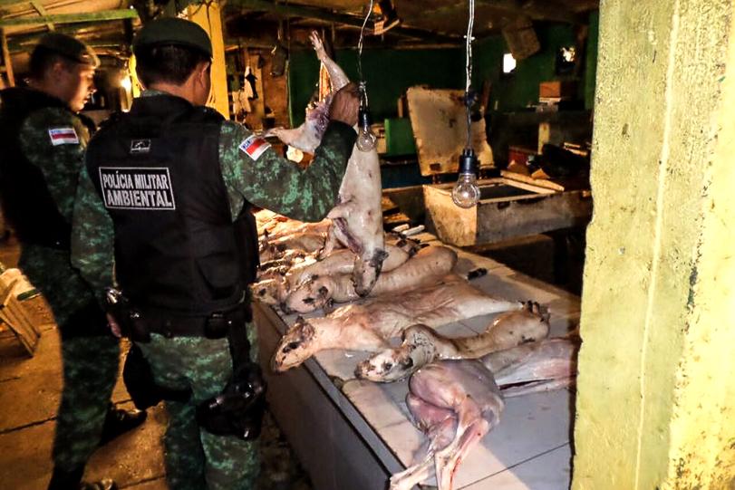 Feirante tentava mascarar a carne de caça quando foi  surpreendido pelo policiais. Foto: Divulgação