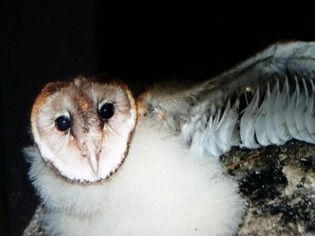 Filhote está com aproximadamente um mês, segundo biólogos. Foto: Divulgação/Dersa