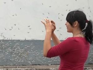 Moradora registra imagem de mariposas em Prado, na Bahia. Foto: Imagem/TV Bahia