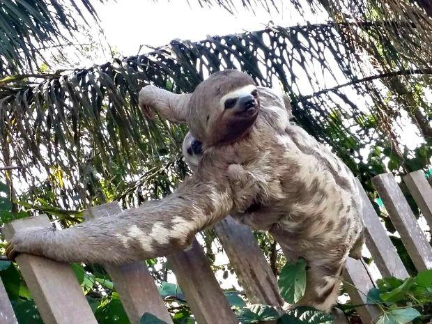 Animal estava acompanhado com o seu filhote quando foi fotografado. Foto: Elizânia Dinarte/Arquivo pessoal