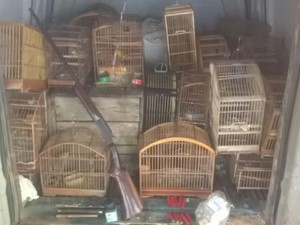 Pássaros estavam em cativeiros de duas residências. Foto: Paulo Veiga/ Inter TV