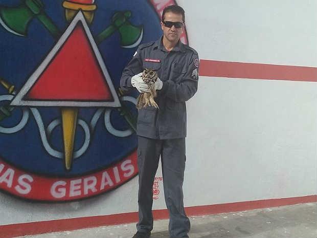 Bombeiros resgataram coruja em Barbacena, MG Foto: Corpo de Bombeiros/Divulgação