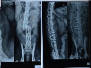 Radiografias mostram o antes (esq.) e depois (dir.) da cirurgia de Léo. Foto: Bruno Favaro/RPC