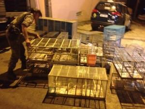 Além das aves encontradas em gaiolas, os policiais encontraram vários pássaros mortos. Foto: André Salamucha/RPC