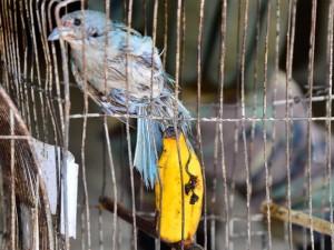 Alguns animais apresentavam sinais de maus tratos. Foto: Sérgio Fortuna/PMBM
