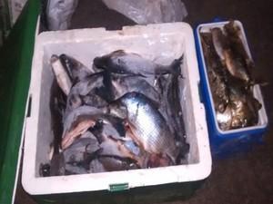 Pescados estavam divididos em dois carros. Foto: Polícia Rodoviária/ Divulgação