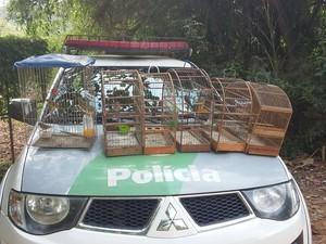 Aves apreendidas em São José dos Campos. Foto: Divulgação/Polícia Ambiental