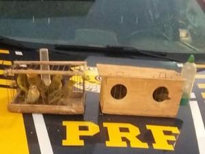 Pássaros foram apreendidos durante abordagem na BR-101. Foto: Divulgação/PRF