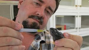 Williams segura uma Taipan da Papua Nova Guiné, terceira mais venenosa do mundo. Foto: David Williams