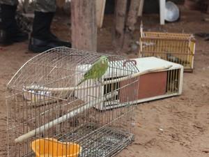 Aves foram apreendidas e proprietário da casa, multado. Foto: Catarina Costa/G1 PI