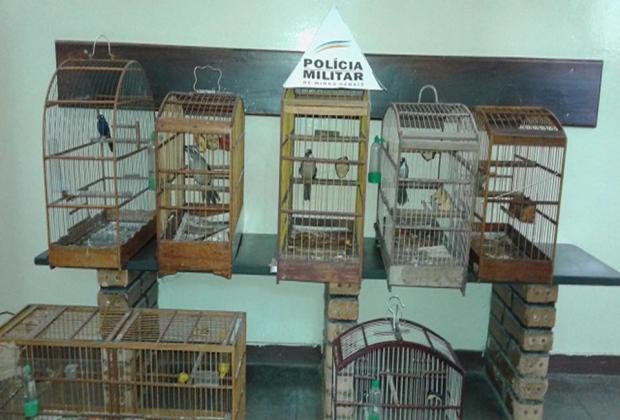 De cada 10 animais vítimas do tráfico, apenas um sobrevive até chegar ao seu destino final