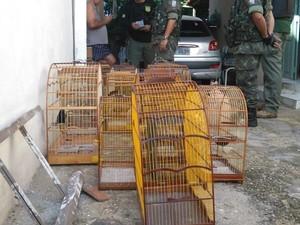 Animais eram mantidos presos em gaiolas. Foto: Divulgação/Polícia Ambiental