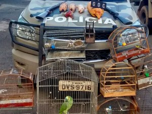 Animais silvestres apreendidos com dupla suspeita de caça ilegal no DF. Foto: Polícia Militar/Divulgação