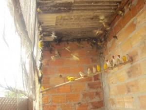 Aves foram apreendidas e entregues na delegacia. Foto: Divulgação/PM