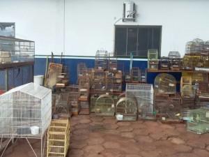 No total, havia 34 aves silvetres e 40 exóticas na casa do comerciante. Foto: Divulgação/ PMA