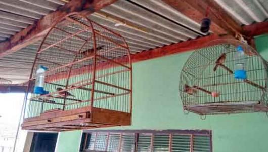 Mantidos em gaiolas, pássaros silvestres foram apreendidos pela polícia em Adamantina