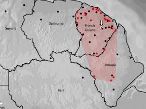 Espécie foi encontrada no Amapá e na Guiana Francesa (pontos vermelhos). Foto: Iepa/Divulgação
