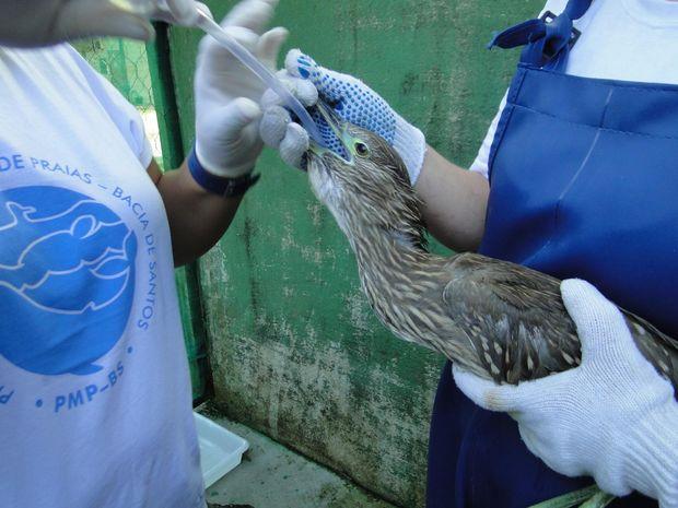 Savacu foi resgatada e tratada pela equipe: animal sofreu danos neurológicos