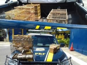 PRF de Garanhuns flagra crime ambiental e apreende 9 pássaros silvestres após acidente. Foto: Divulgação/PRF/Montagem