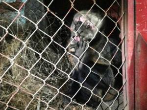 Macaco foi capturado sem ferimentos. Foto: Hellen Dourado/Arquivo Pessoal