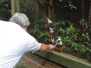 Larvas são distribuídas aos animais como alimentação complementar. Foto: Heloísa Casonato/G1