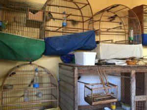Homem foi preso suspeito de manter pássaros em cativeiro. Foto: Divulgação/PM