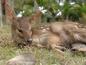 Animais são atropelados em reserva do estado (Foto: Reprodução/ TV Gazeta)