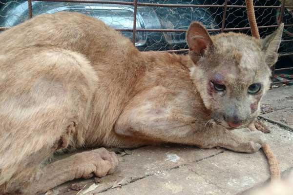 Animal estava bastante debilitado e com ferimentos nos olhos (Foto: PM de Meio Ambiente)