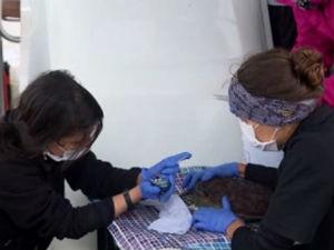 Um verdadeiro laboratório é montado em alto mar para monitorar as tartarugas-verdes (Foto: Reprodução/ RPC)