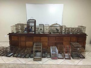 Mais de 30 aves silvestres foram apreendidas na manhã desta quinta-feira, 30. Foto: Divulgação/Polícia Civil