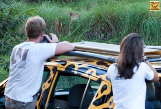 Em cinco anos de projeto, 65 onças pintadas são monitoradas no refúgio ecológico da Fazenda Caiman. (Foto: Projeto OnçaFari)
