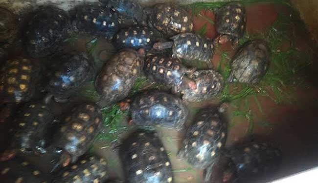 Jabutis, pássaros e outros animais foram resgatados na Bahia.